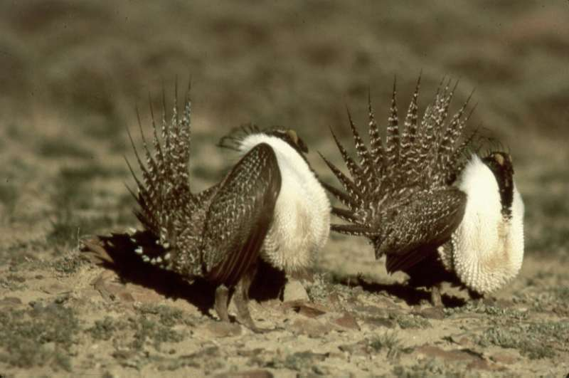 USFWS Decision on Greater Sage-grouse Emphasizes Land Use Planning and Management Going Forward