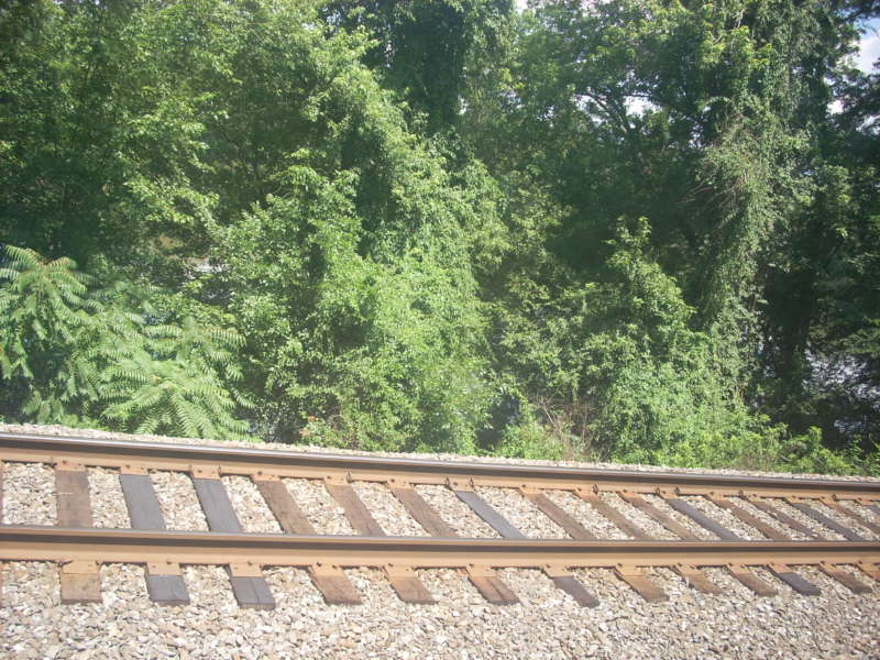 Draft Sustainability Standards Being Released for the Railroad Industry